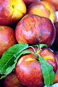 Fresh nectarines on a market stall in Lazio, Italy