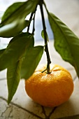 A clementine with stalk and leaves