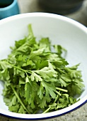 Flat-leaf parsley in a bowl