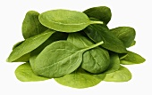Young spinach leaves