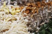 Various types of small mushrooms