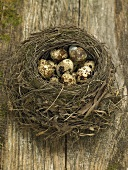 Quails' eggs in a nest