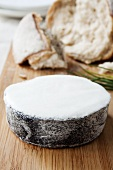 Goat's cheese with ash