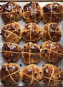 Twelve hot cross buns on a baking tray