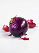 Eine geschälte, rote Zwiebel