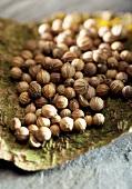 Coriander seeds on tree bark