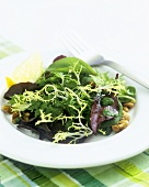 Mixed salad leaves with pesto
