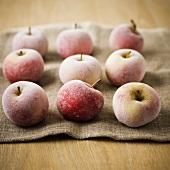 Nine frozen apples on hessian sack