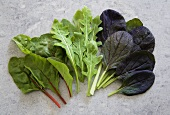 Various types of lettuce leaves (red bok choy, spinach, rocket)
