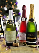 Various types of sparkling wine with labels (Prossecco, Cava, Champagne)