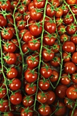 Cherry tomatoes, macro zoom