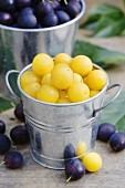Mirabelles and damons in zinc buckets