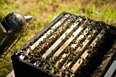 A bee hive and a smoker (beekeeper tool)