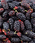 Mulberries (macro zoom)
