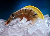 A tiger prawn on ice