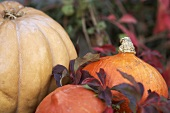 Various pumpkins and autumnal leaves