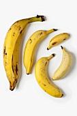 Bananas in various sizes