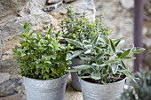 Sage, peppermint and thyme in pots in front of a stone wall