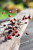 Rose hips and chestnuts on a wooden board in the open air