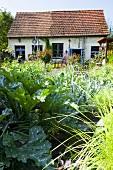 A country vegetable garden