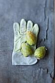 Drei Kaktusfeigen auf Handschuh