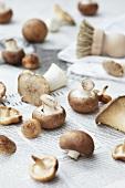 Fresh mushrooms with a brush