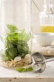 Basil leaves, pine nuts and garlic in a measuring jug