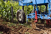 Gentle ground preparation at an organic vineyard