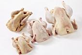 Fresh poultry: soup chicken, chicken, spring chicken, guinea fowl