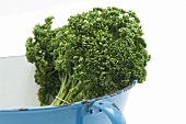 Parsley in a colander