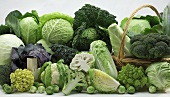 Varieties of cabbage decoratively arranged