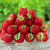 Lots of 'Framberry' strawberries (Fragaria x ananassa)