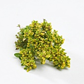 Thyme 'Bertram Anderson' (Thymus x citriodorus)