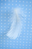 A white feather on a blue and white surface