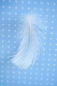 Eine weisse Feder auf blau-weißem Untergrund
