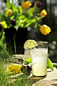 A glass of lemon and ginger lemonade in a garden