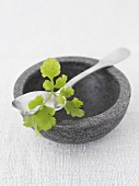 Coriander leaves on a stone bowl with spoon