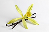 Vanilla blossom with vanilla pod