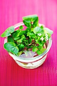 Watercress in a water dish on a pink surface