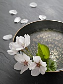 Cherry blossoms in a water bowl and scattered cherry blossom leaves