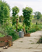 Vegetable garden with a watering can