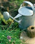 Schnittlauch, Giesskanne und Schnur im Garten