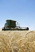 Reaper in a wheat field