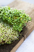 Alfalfa and rocket sprouts on a wooden board