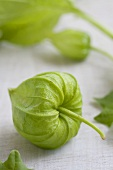 Green physalis flowers (close-up)