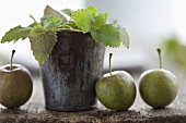 Lemon balm in a zinc with apples next to it