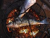 Bass on a grill over glowing coals