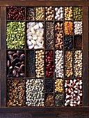 A seedling tray filled with various legumes