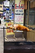 Cochon de lait outside a shop in Vietnam