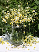 Camomile flowers in a glass jug